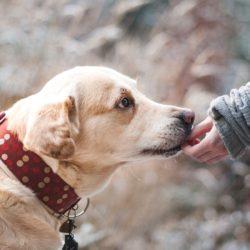 Dermatologické problémy u zvířete – alergie nebo ne?