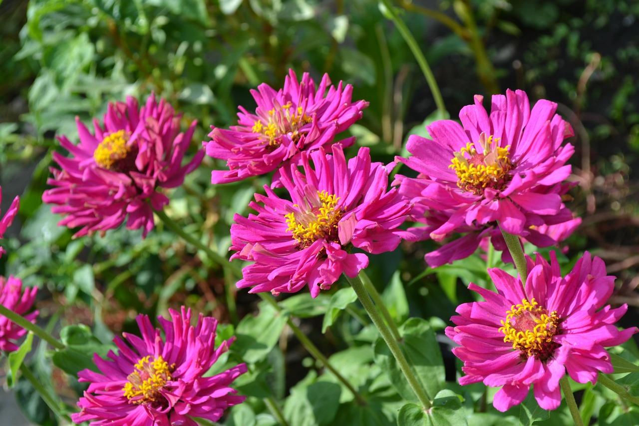 Okrasné rostliny na zahradě