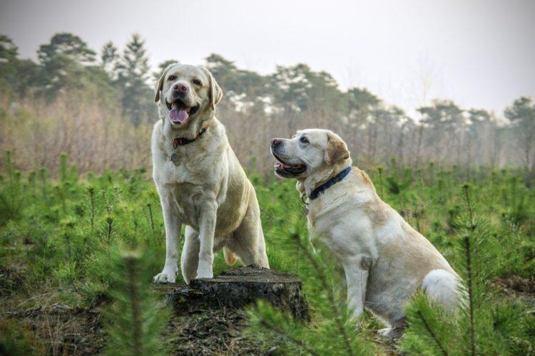 Jak vybrat správné krmivo pro psa?